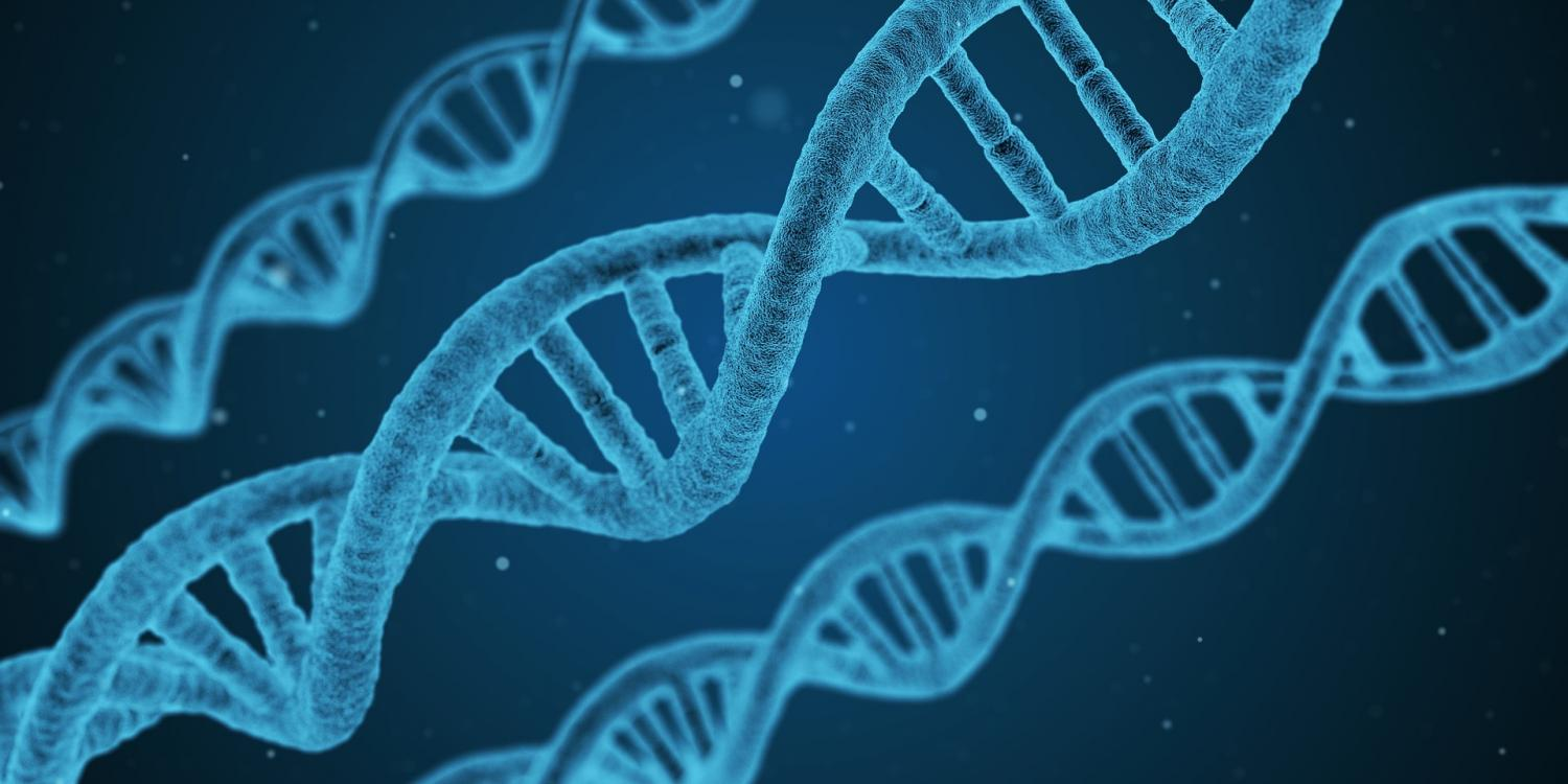 Newly mapped genes may hold keys to ADHD