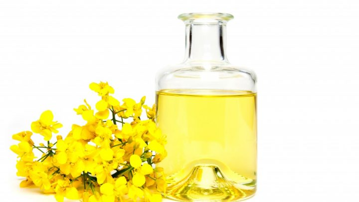 Healthy diet: canola as a new high-quality source of protein discovered