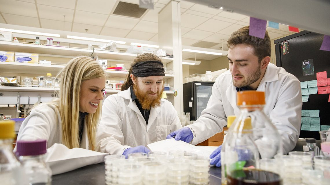 Tiny worm mimics key genetic risk for Alzheimer's