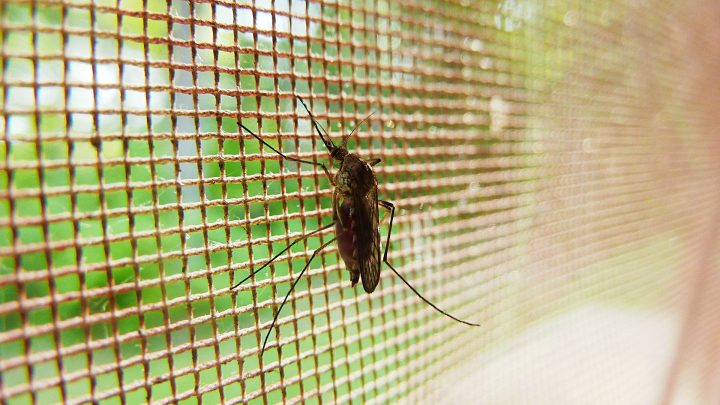 Mosquito-killing drug reduced malaria episodes by a fifth among children, according to randomised trial