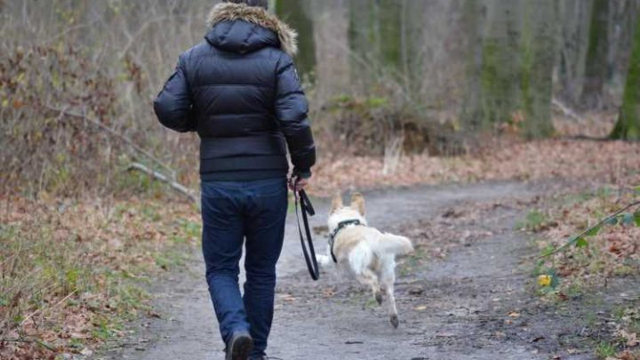 Dog owners more likely to meet weekly exercise targets