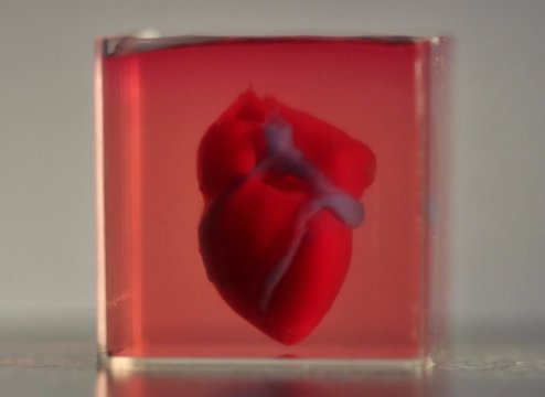 Scientists print first 3D heart using patient's biological materials: Engineered heart completely matches the immunological, cellular, biochemical and anatomical properties of the patient