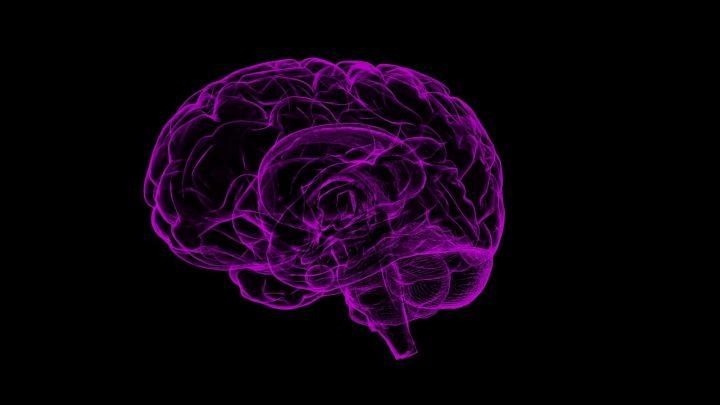 Study reveals breakthrough in understanding long-term memory retrieval