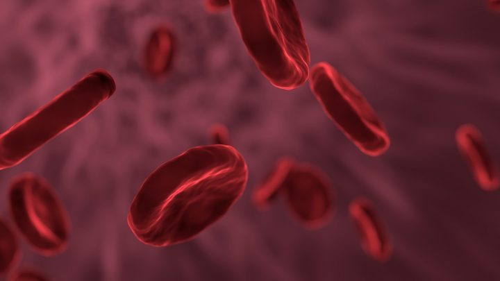 T2Bacteria Panel rapidly and accurately diagnoses common bloodstream infections