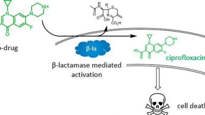 Decoy antibiotics could get around bacteria's defences