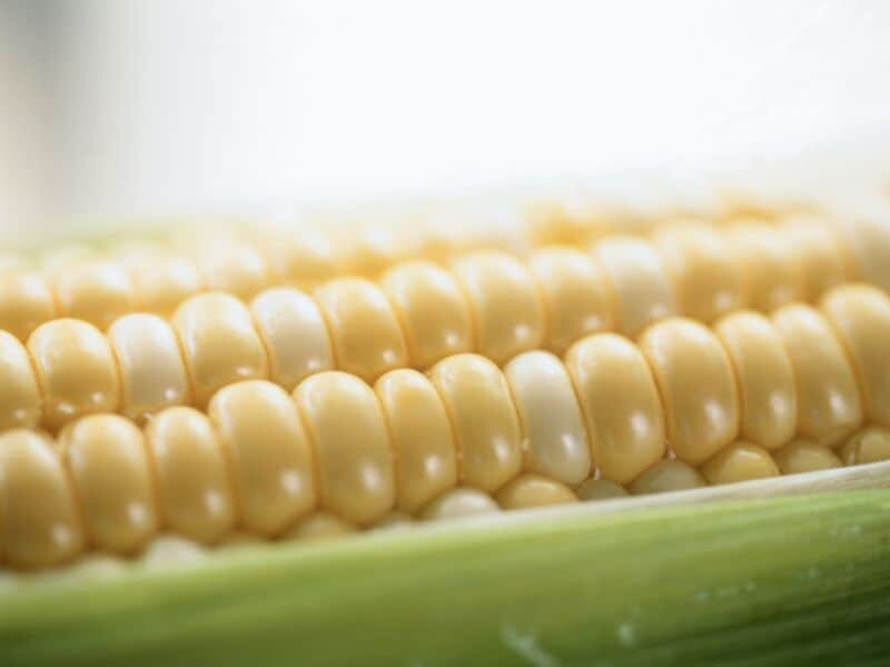 Make the most of summer's sweet treat: Delicious corn