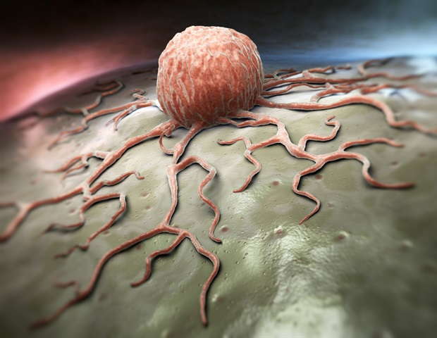 In vivo imaging reveals how anti-CD20 antibodies guide the immune system to attack tumors