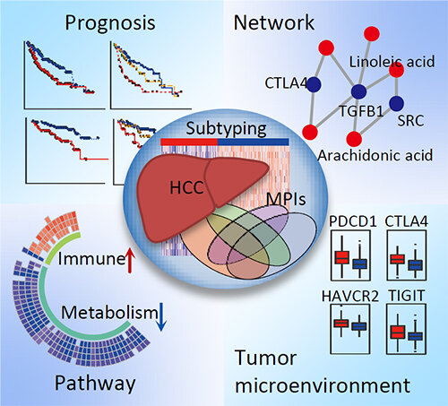 Study sheds light on precise personalized hepatocellular carcinoma medicine